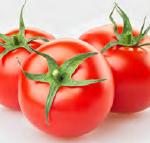 tomato paste standardization system
